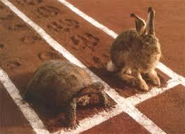 rabbitracesturtle